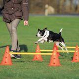 Trixie Dog Activity Obstacle Set S (3 pcs)
