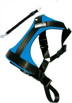 GreenDog Safety belt L blue