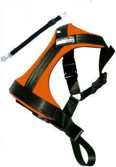 GreenDog Safety belt L orange