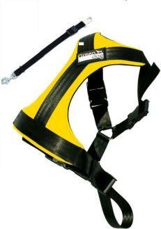 GreenDog Safety belt L yellow